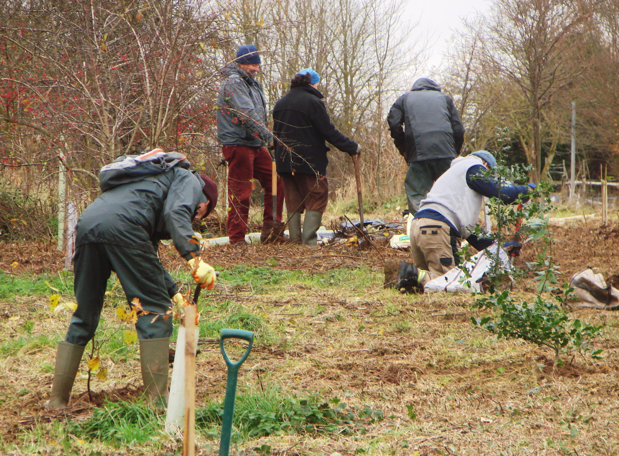 Members of SGS planting saplings, November 2019 (thanks to Terry Abbiss for the picture)